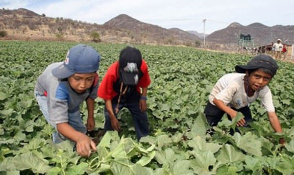 child-farmworkers