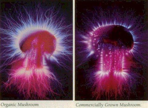 kirlian mushroom