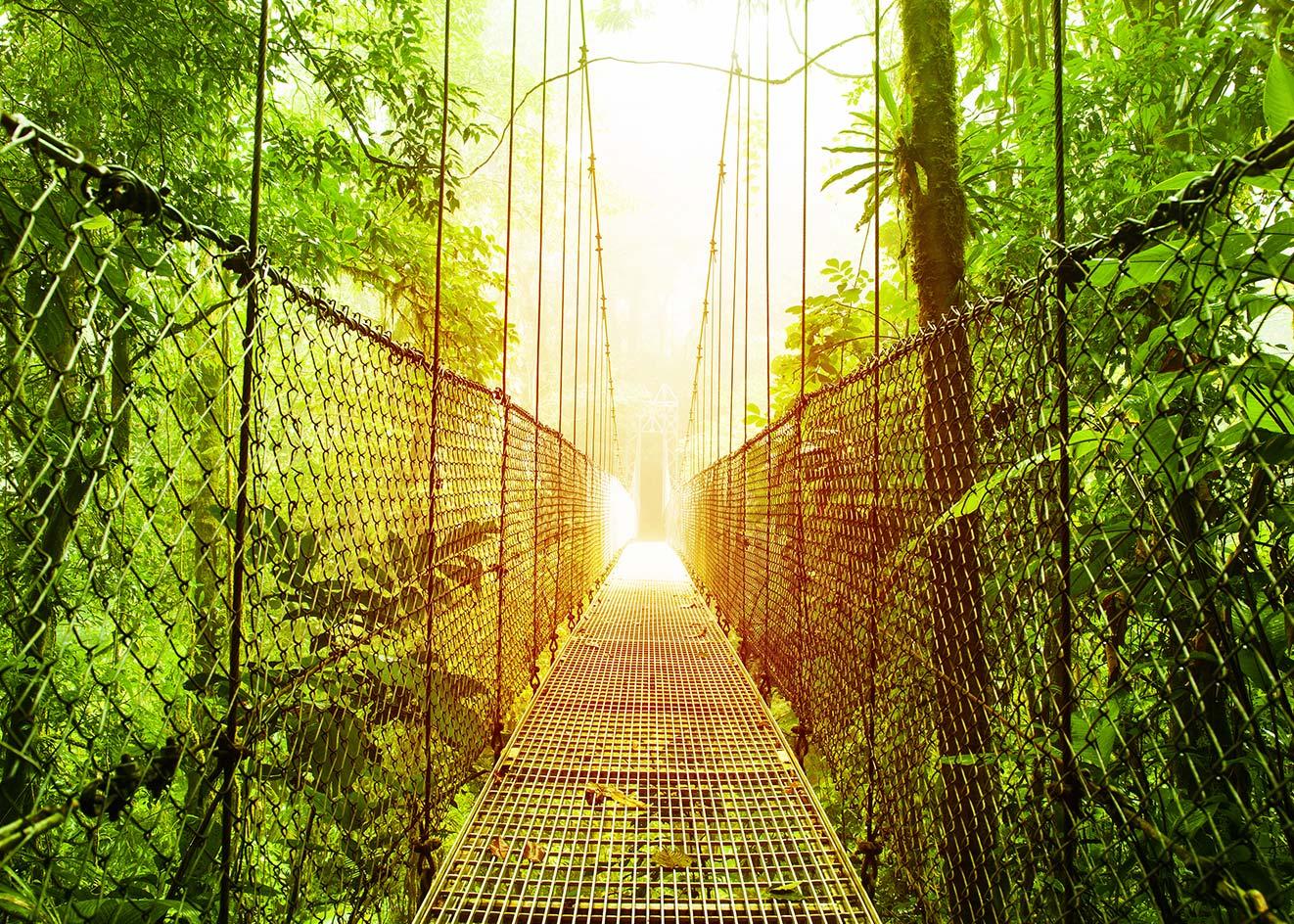 leafy bridge
