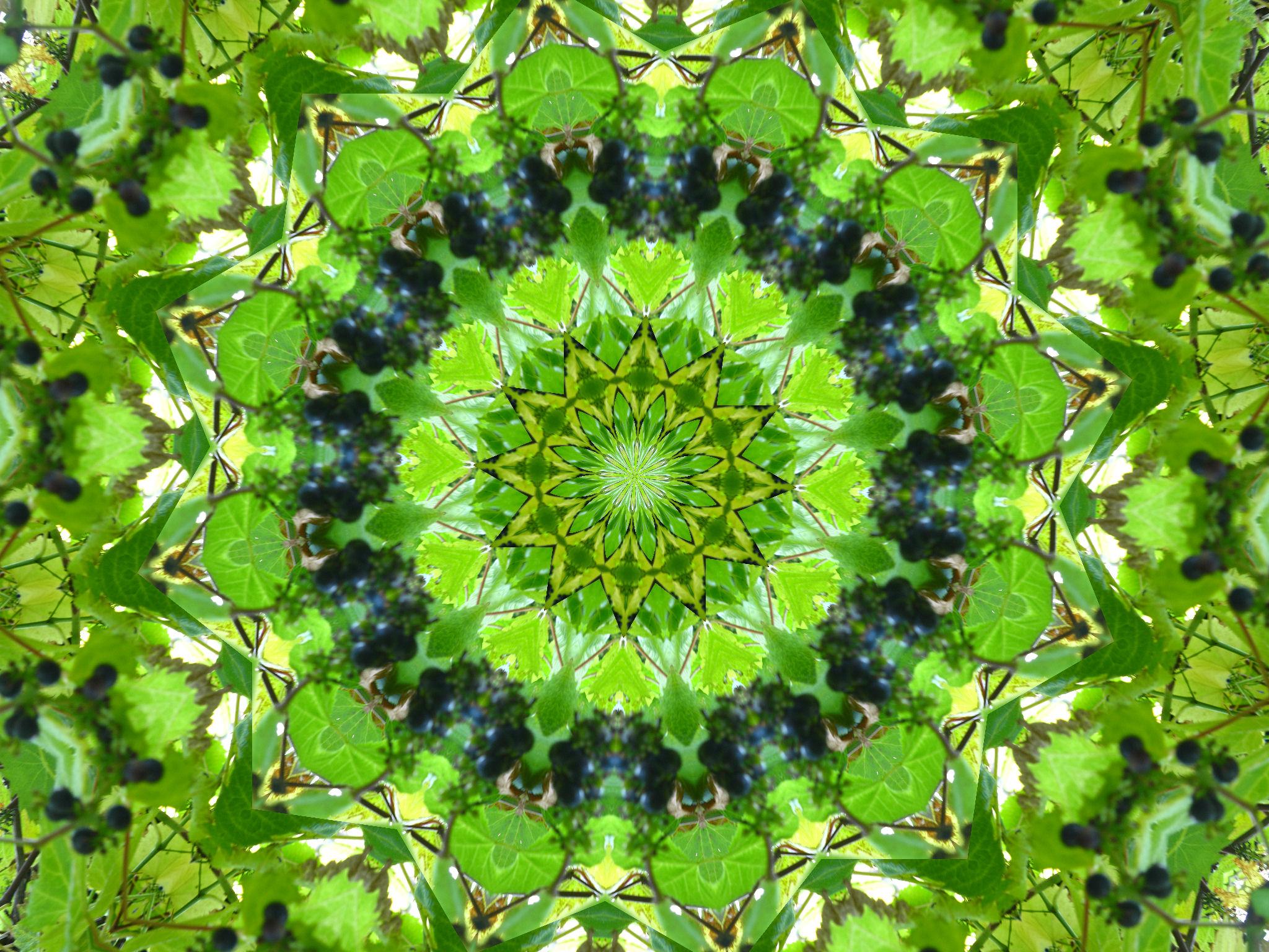 kaleidoscope___leaves_grapes_2_by_rohar-d3kzlkc