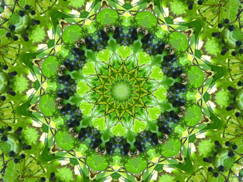 kaleidoscope___leaves_grapes_2_by_rohar-d3kzlkc