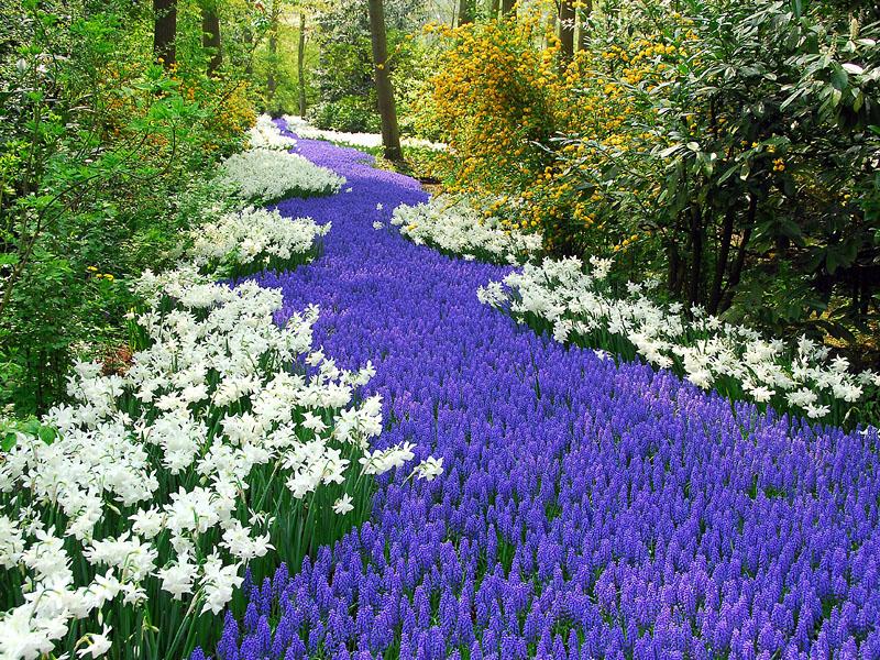 New Earth garden.jpg
