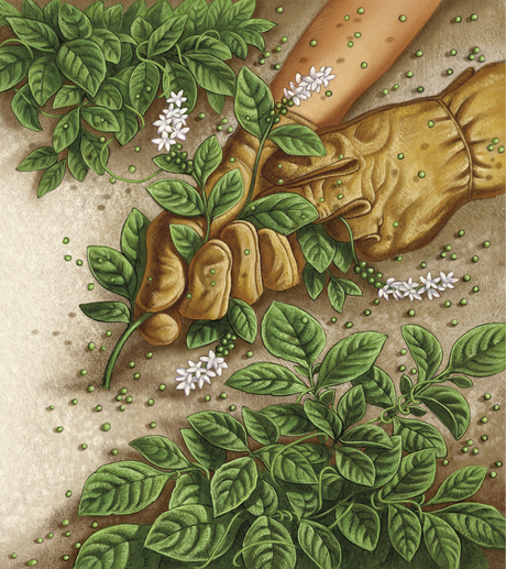 potato weed parable
