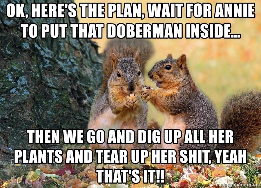squirrel meme.jpg
