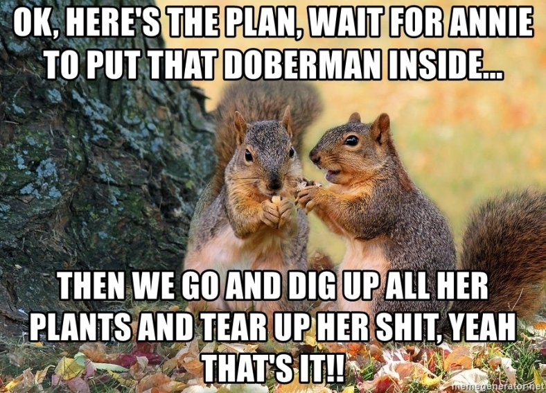 squirrel meme.jpg