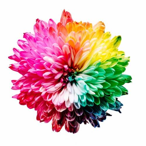 color therapy flower